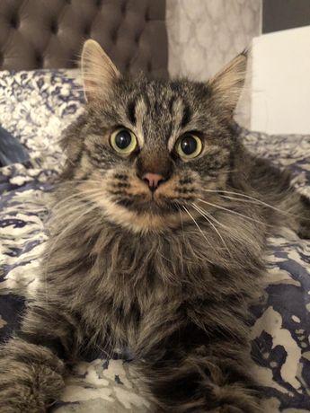 Ищет дом Черишский Кот
