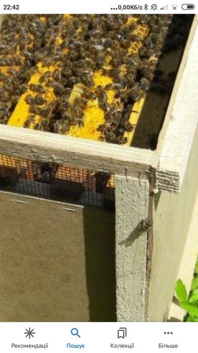 Бджолопакети дадан Подгайцы - изображение 1
