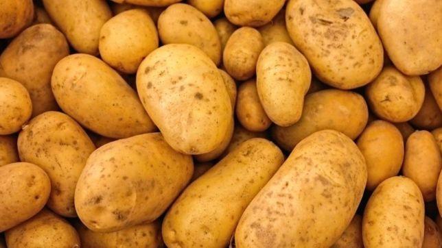 Ziemniaki jadalne Bryza
