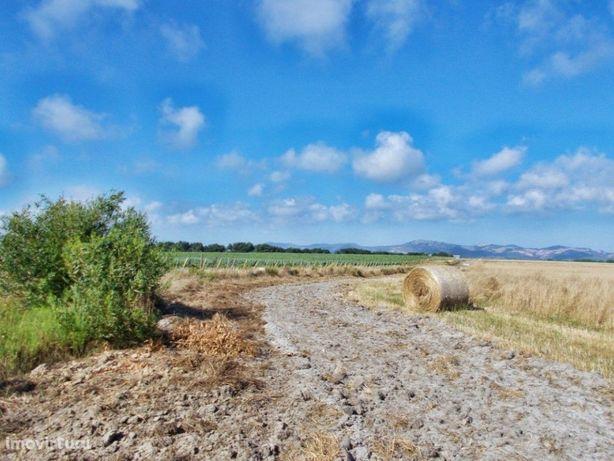 Terrenos Horticulturais No Alentejo