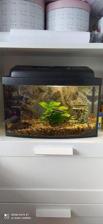 Akwarium 25l z życiem