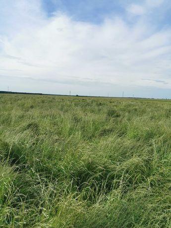 Słoma z trawy nasiennej