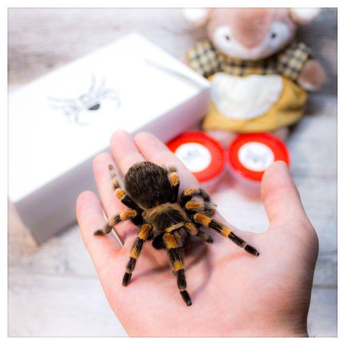 паук птицеед+набор-подарок корм субстрат пинцет террариум павук птахоъ