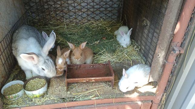 Кролики маленькі