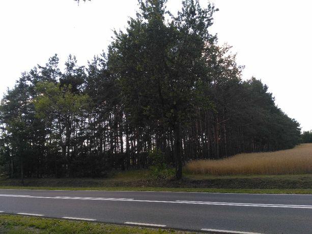 Atrakcyjna, zalesiona działka 6700 m2, droga 575 ( Sochaczew - Płock ]