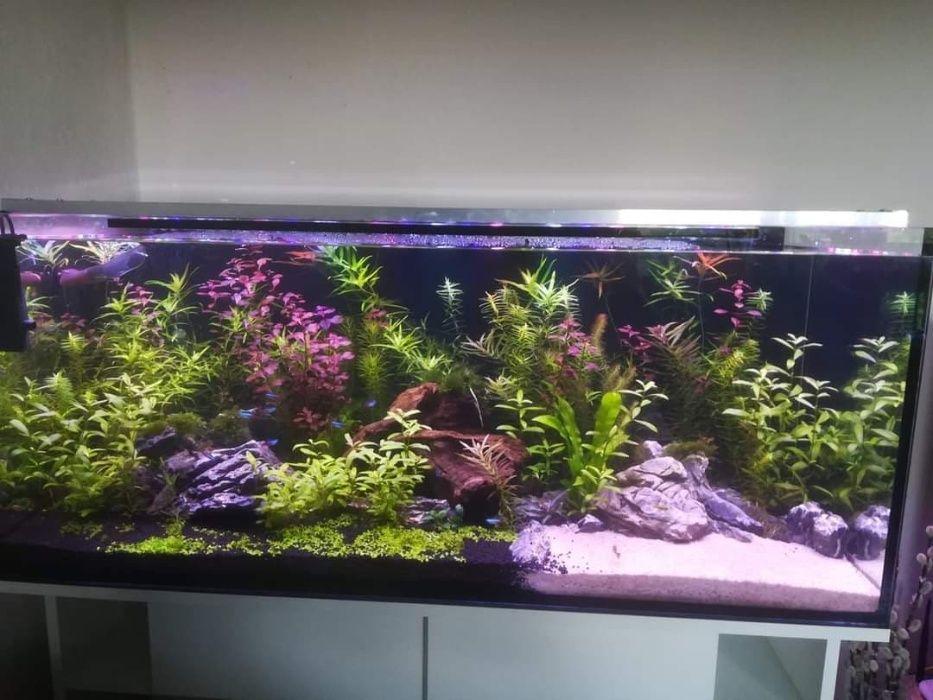 Akwarium 300L + filtr + szafka + CO2 Sochaczew - image 1