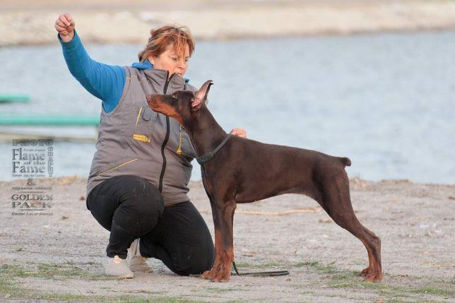 Доберман щенок девочка с супер ласковым характером, любит детей