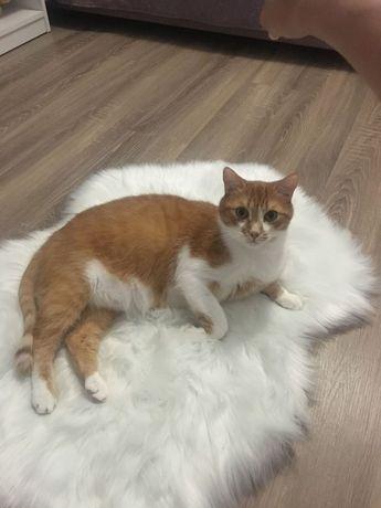 Пропал рыжий кот - Виноградарь