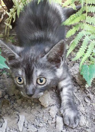 Симпатичные котята в добрые руки!