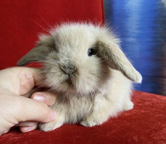 Вислоухие декоративные кролики, длинношерстные красотулики