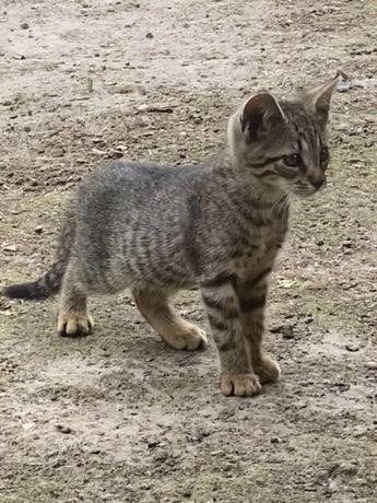 Słodka mała kotka do oddania w dobre ręce