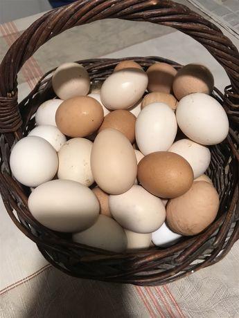 Jajka Wiejskie .