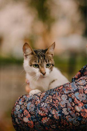 Добрейшая молодая кошка, привита, стерилизована