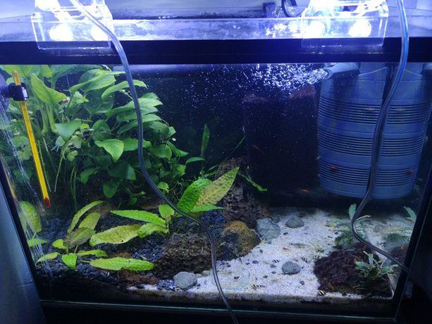 Oświetlenie do akwarium, krewetkarium Crystal Clip
