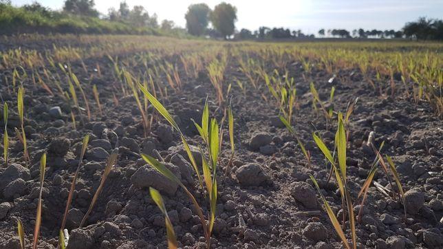 Wydzierżawie grunty rolne.