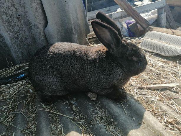 Продам кроликов молодняка