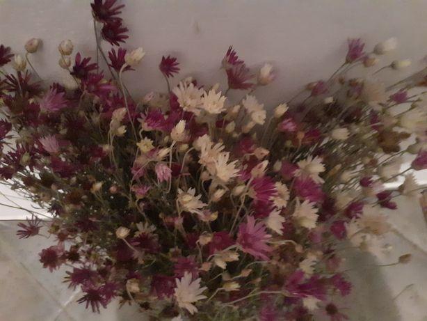 Suchokwiat kwiaty bukiety kwiaty suszone