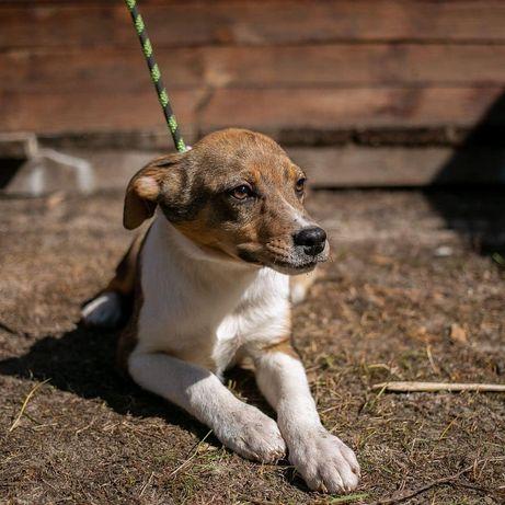 Собака 4 месяца Скуби пёс щенок щеня собачка