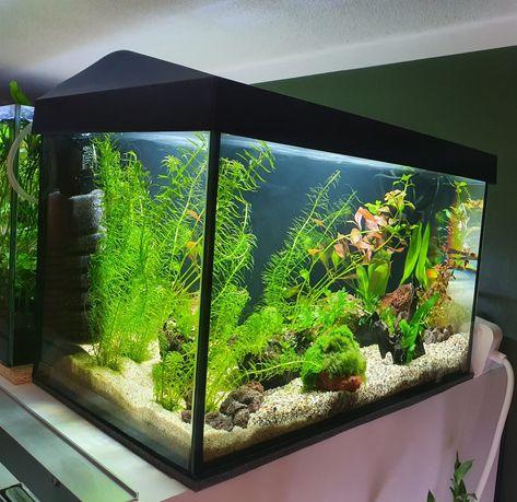Akwarium Aquael 25L Pełny Zestaw Rybki Rośliny Filtr Oświetlenie LED