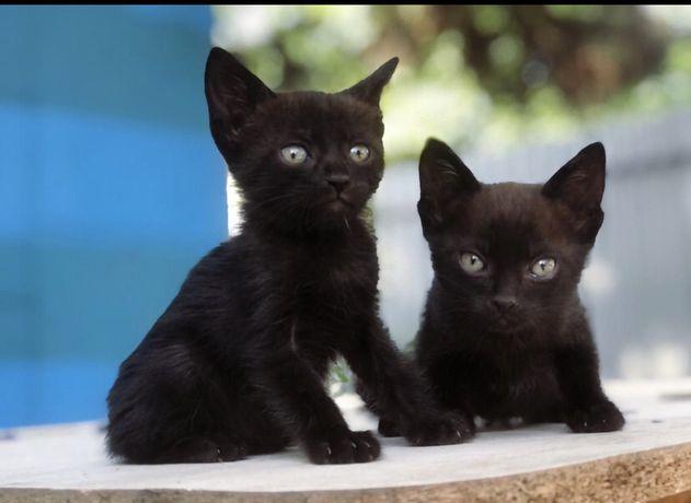 Маленькие черные котята в добрые руки