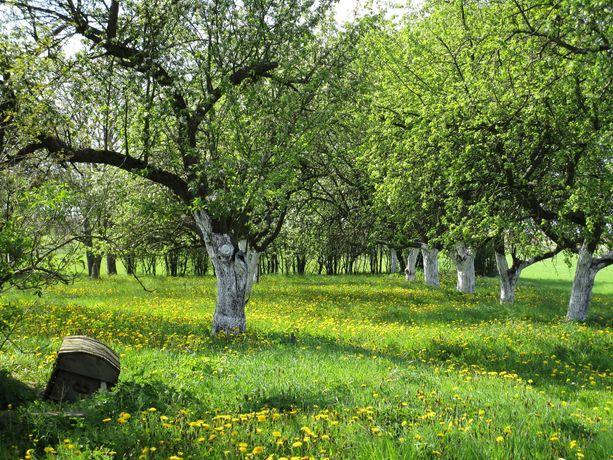 Działka W Tradycyjnym Sadzie*Polesie*Gostynin*Pojezierze Gostynińskie