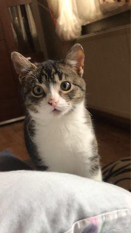 Oddam kotkę, zdrową, zadbaną