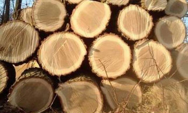 Drewno opałowe liściaste