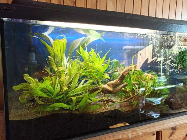 Akwarium z filtrem