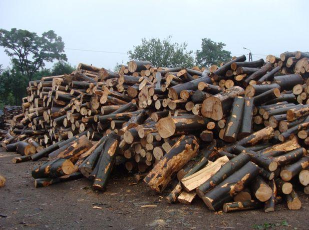 Sprzedam drewno drzewo w walkach