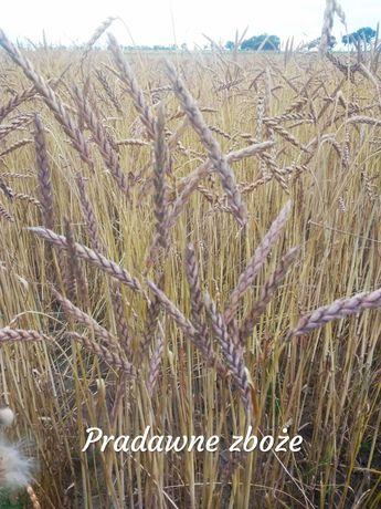 Mąka Orkiszowa Ekologiczna Pradawna Odmiana