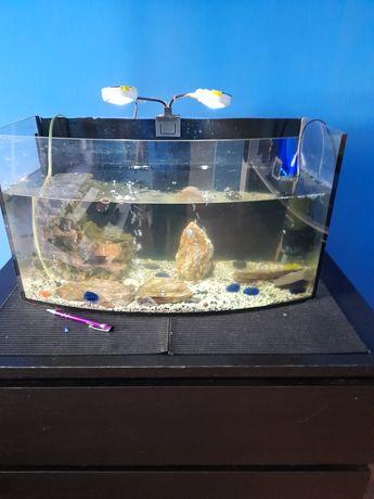Akwarium 80l. z wyposażeniem