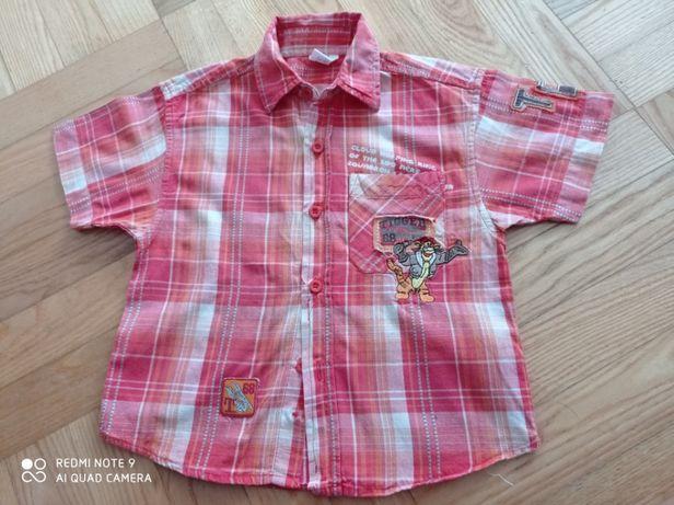 koszula z krótkim rękawem, C&A, ROZM.98, z tygryskiem, stan b.dobry