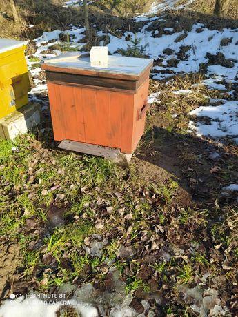 ule,pszczoły, rodziny pszczele