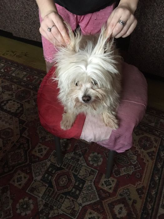 Потерялась собака Мариуполь - изображение 1