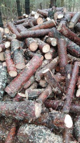 Drewno opałowe, sosna