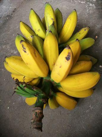 Bananeira de varios tamanhos