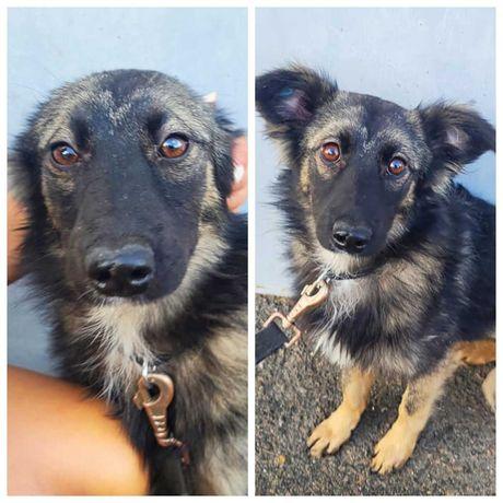 Небольшая собачка с бездонными глазами Мила, собака, 10 кг, 10 мес