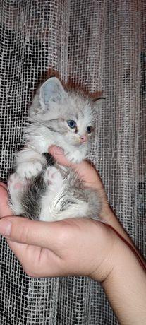 Шукаємо люблячих господарів для наймилішого кошенятка