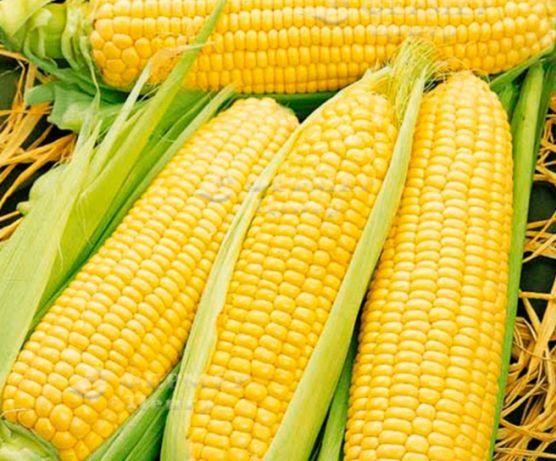 Продам кукурузу ..