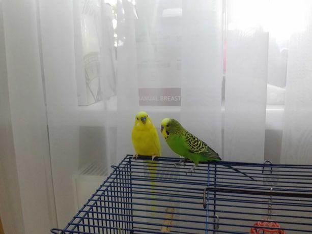 Папуги з кліткою