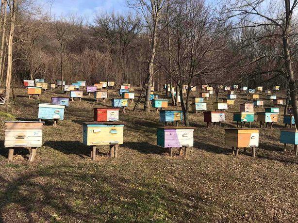 Пчелопакеты, бджолопакети, бджолосімї, сезон весна 2020, отличная цена