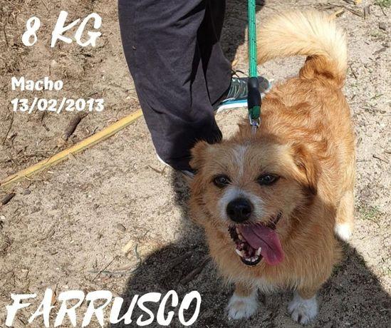 Farrusco - 8kg para adoção