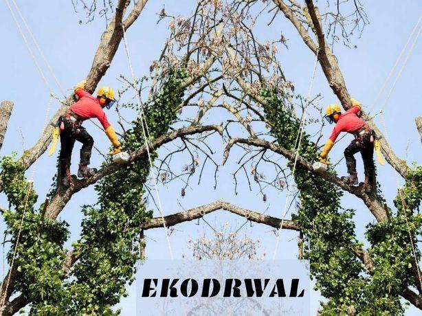 Wycinka drzew i pielęgnacjia zieleni