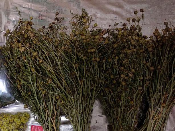 Гармала трава пучок