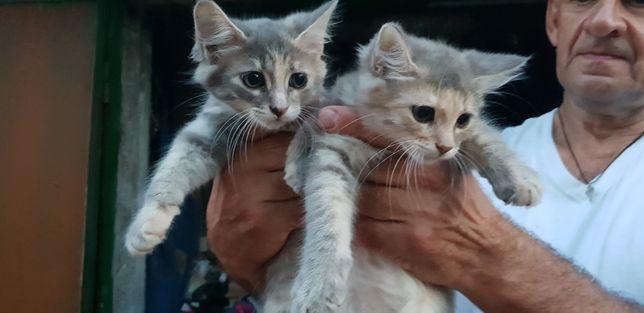 Бесплатно котята 3 месяца