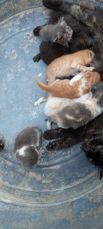 Котята маленькие отдам