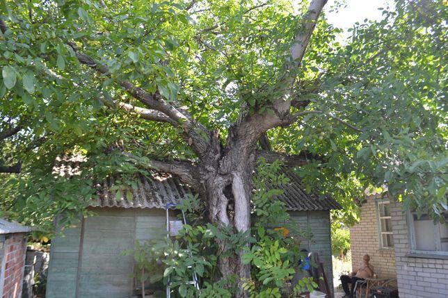 Спил аварийных деревьев Чистка участков