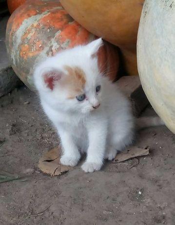 Кошенята шукають господаря