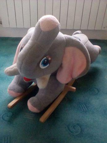 Bujak słonik na biegunach