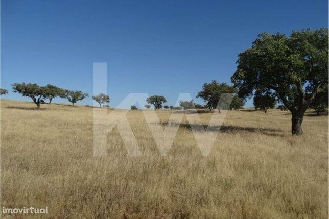 Terreno à venda com 7,5 ha - Ourique